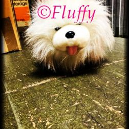 The original Fluffy